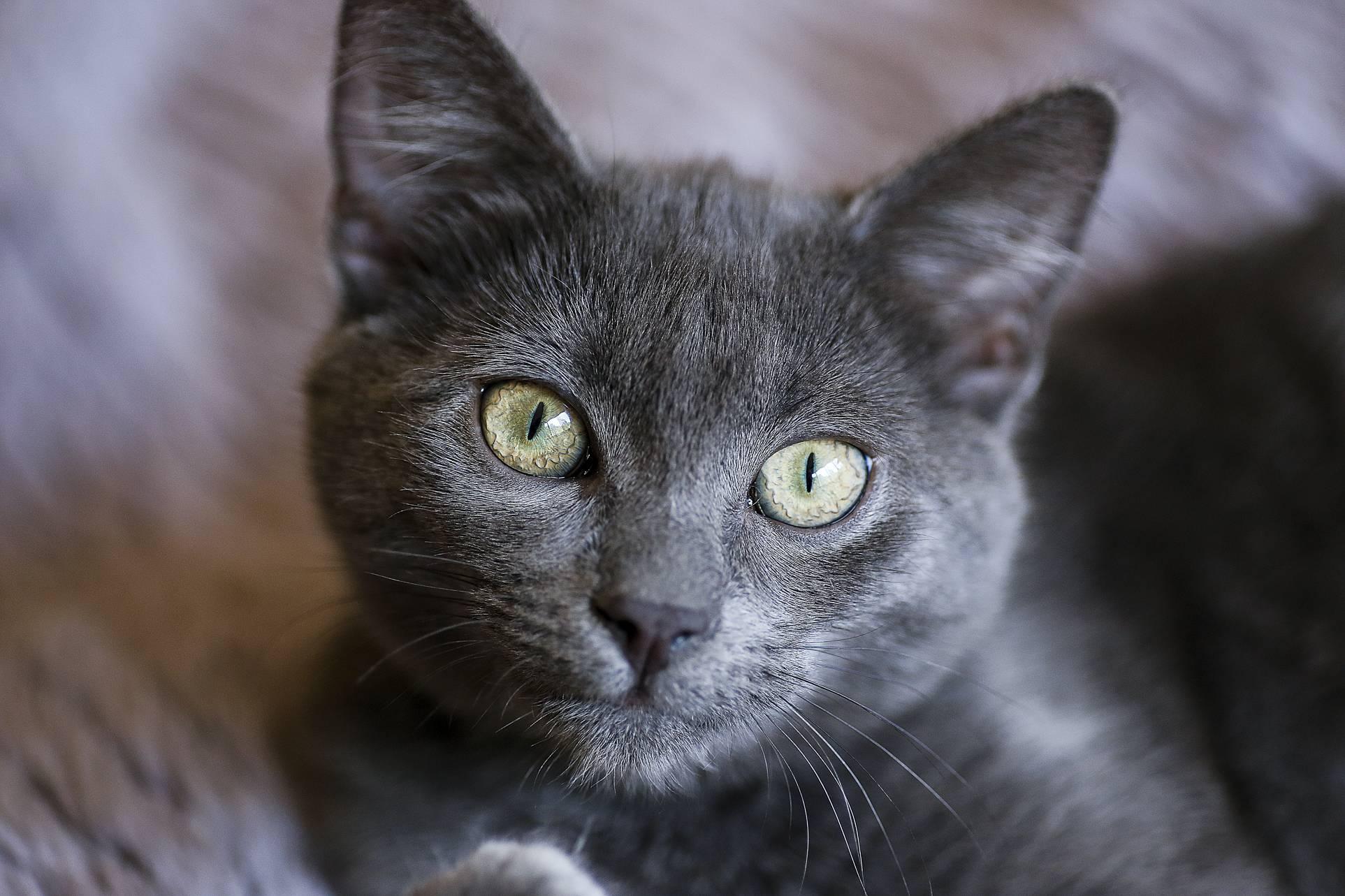Neelix the kitten looking at you