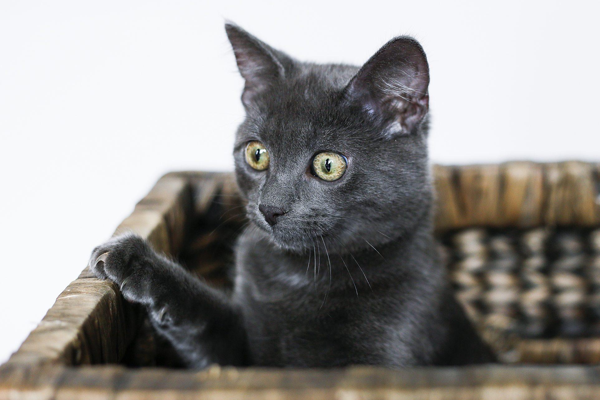 Neelix the Kitty enjoying the box